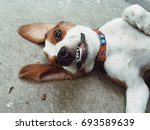 Stock photo smile of dog 693589639
