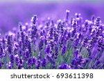 beautiful close up shot of... | Shutterstock . vector #693611398