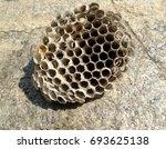 wasp nest | Shutterstock . vector #693625138