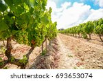 old vineyards with red wine...   Shutterstock . vector #693653074