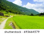 a fresh green stone wall and... | Shutterstock . vector #693664579