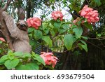 cute sloths in costa rica | Shutterstock . vector #693679504
