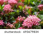 close up macro detail of... | Shutterstock . vector #693679834