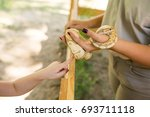 child petting a snake with...