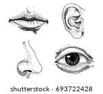 human biology  organs anatomy... | Shutterstock .eps vector #693722428