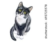 Stock photo cute black cat isolated on white background watercolor stock illustration template a realistic 693725578