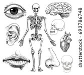 human biology  anatomy... | Shutterstock .eps vector #693786748