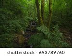 rain forest with river | Shutterstock . vector #693789760