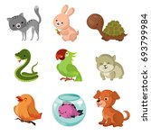 pets domestic animals flat... | Shutterstock . vector #693799984