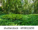 green forest with strong... | Shutterstock . vector #693812650