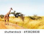 the giraffe crosses the road in ... | Shutterstock . vector #693828838