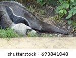 anteater | Shutterstock . vector #693841048