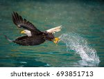 American Bald Eagle Swooping T...