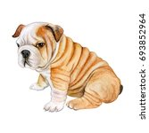Stock photo puppy english bulldog isolated on white background cute realistic dog watercolor illustration 693852964
