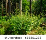 faery summer sunny forest in... | Shutterstock . vector #693861238