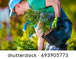 Planting New Trees. Gardener Buying New Plants For His Garden Project. - stock photo