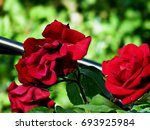 Stock photo flower red nature 693925984