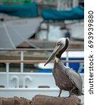 Brown Pelican At The Marina