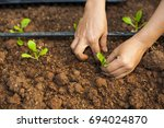 hand   cultivate   vegetable  ... | Shutterstock . vector #694024870