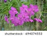 orchid in the garden. | Shutterstock . vector #694074553