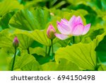 The Lotus Flower And Lotus...