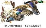 wild duck mallard watercolor... | Shutterstock . vector #694222894