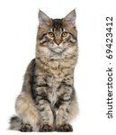 maine coon cat  5 months old ... | Shutterstock . vector #69423412