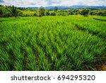 Rice Terrace Rice Field