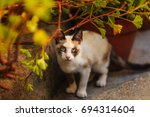 stray cat  or a feral cat is a...   Shutterstock . vector #694314604