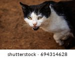 stray cat  or a feral cat is a...   Shutterstock . vector #694314628