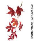 autumn parthenocissus twig... | Shutterstock . vector #694326460