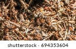 Small photo of Ants
