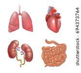 realistic human organs set... | Shutterstock . vector #694373764