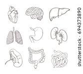 realistic human organs set... | Shutterstock . vector #694373890