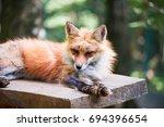 Japanese Red Fox Portrait.