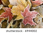 Brightly Colored Autumn Leaves...