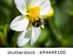 Bumblebee And White Flower...