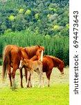 Family Of Horses In Hogsback ...