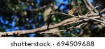 monarch butterfly resting on a... | Shutterstock . vector #694509688
