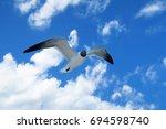 Beautiful Strong Free Seagull...