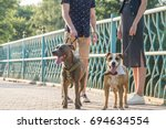 staffordshire terriers and... | Shutterstock . vector #694634554
