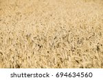 large field of ripe bread corn. ... | Shutterstock . vector #694634560