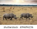 two black rhinos and a herd of... | Shutterstock . vector #694696156