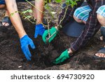 Stock photo autumn transplanting roses two people in work gloves put in humus mature shrub roses 694730920