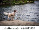 Dog On Dock At Lack