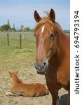 Small photo of Mare and Foal