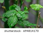 rain drops on a plant after the
