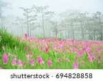 pink flower field blooming for... | Shutterstock . vector #694828858