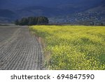 rapeseed flower field