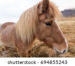 icelandic horses were bred... | Shutterstock . vector #694855243